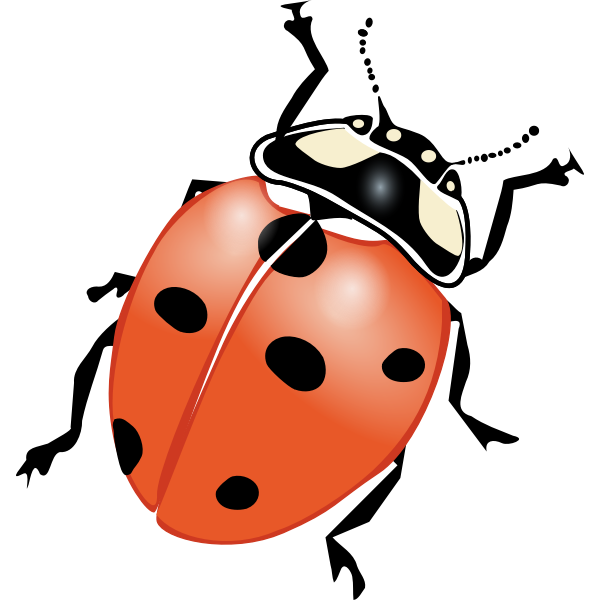 Ladybug vector drawing