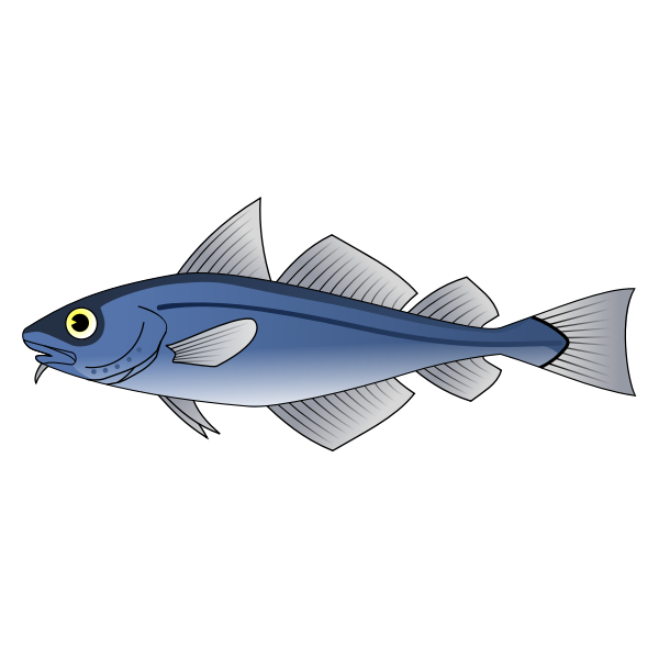 Codfish vector image