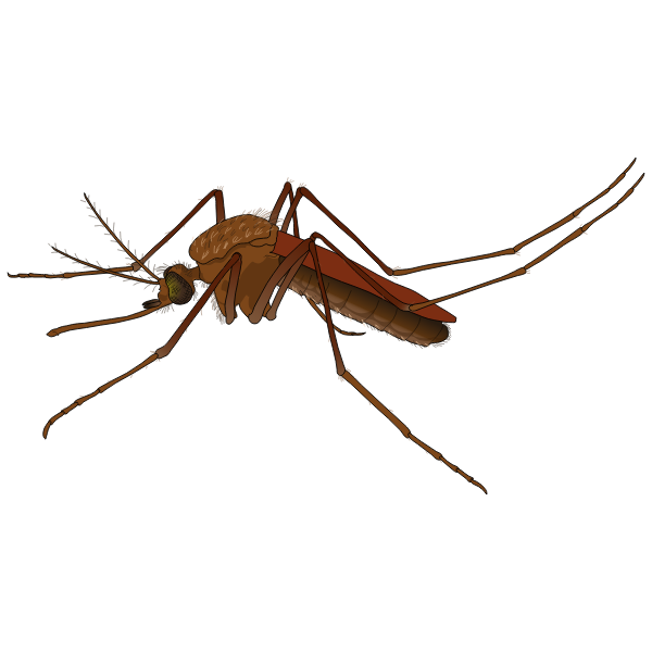 Mosquito-1574086665