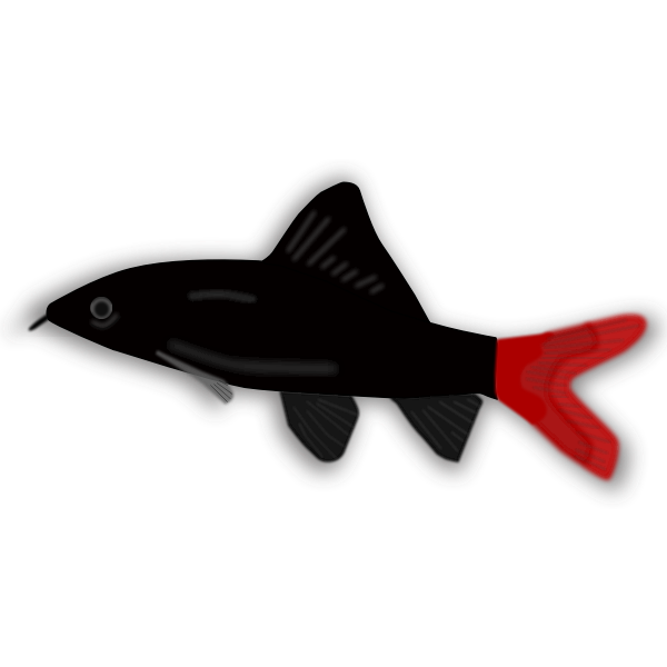 Aquarium fish - Epalzeorhynchos