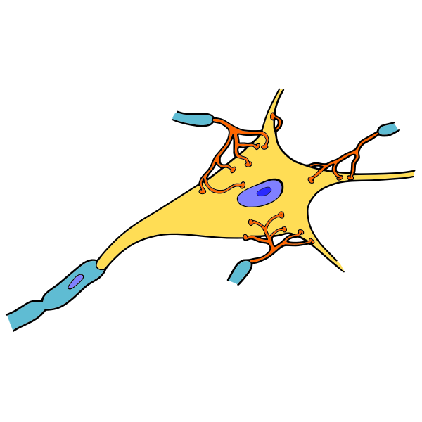 Simple neuron vector drawing