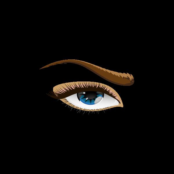 Vector graphics of brown eyebrow eye