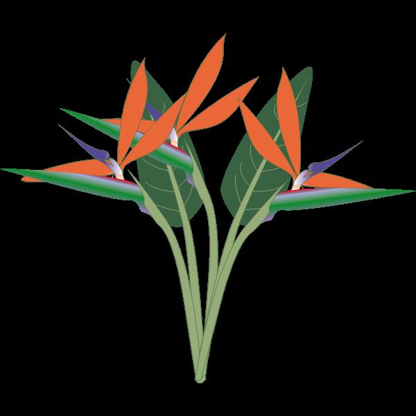Vector clip art of paradise flower