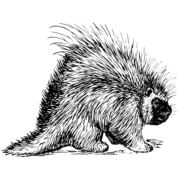 Porcupine vector clip art