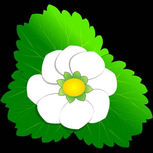 Strawberry Flower