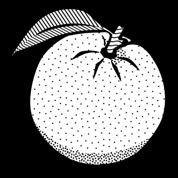 Drawing of an orange