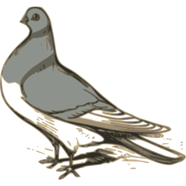 Vector clip art of grey pigeon illustration