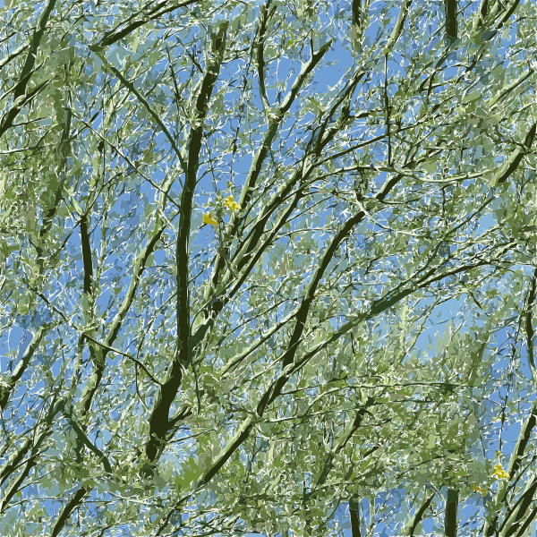 palo verde tucson 2015082838