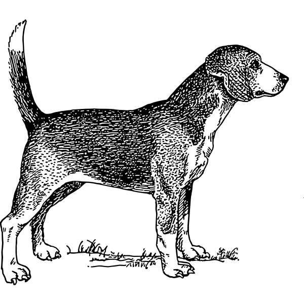 Beagle dog vector illustration