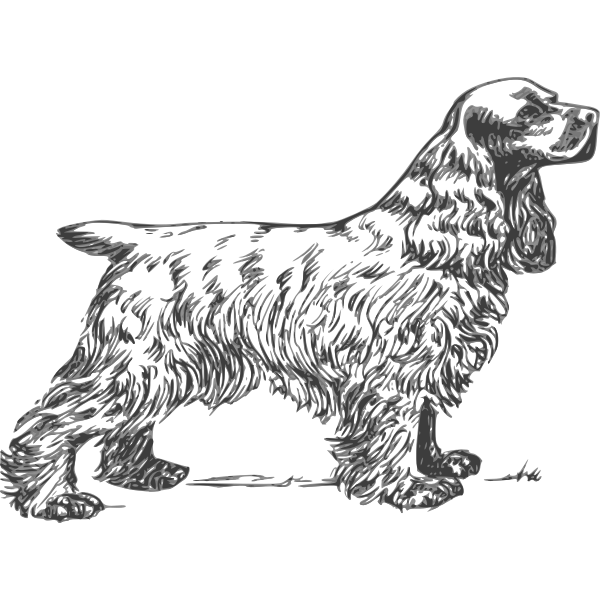 Cocker Spaniel grayscale vector drawing