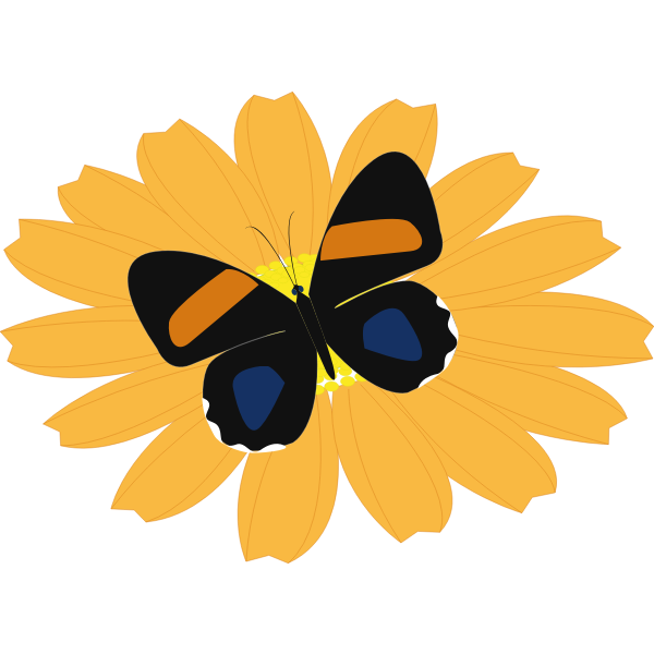 Graphics of black butterfly on an orange flower