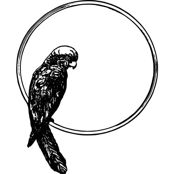 Vector illustration of parrot on a frame