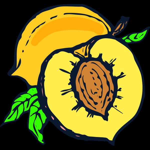 Half of peach vector image
