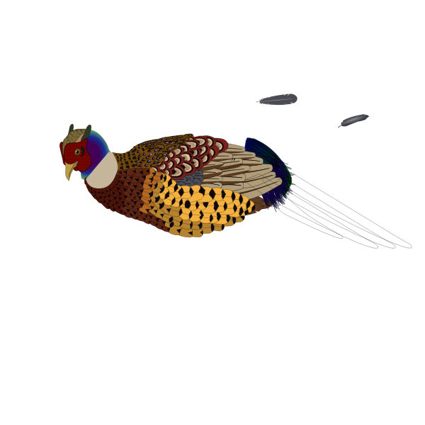 Vector clip art of unfinished pheasant
