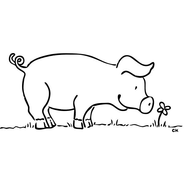 Pig and a flower