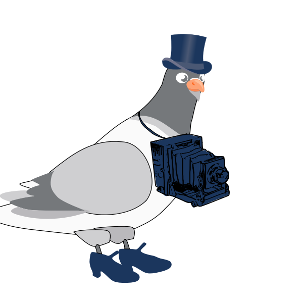 Vector graphics of pigeon with camera