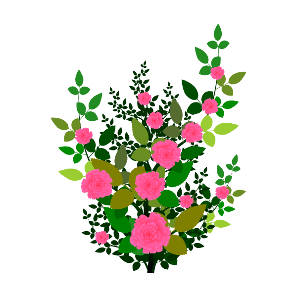 Pink roses vector graphics