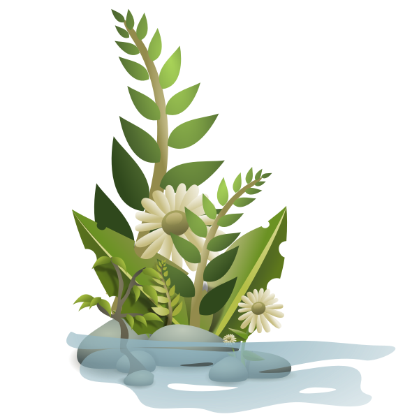 Vector graphics of selection of plants in water