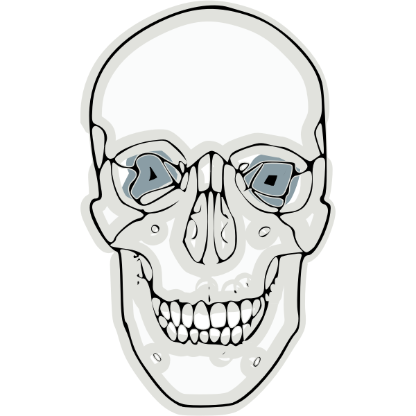 Vector graphics of digitalized human skull
