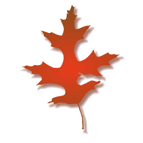 Oak leaf vector illustration