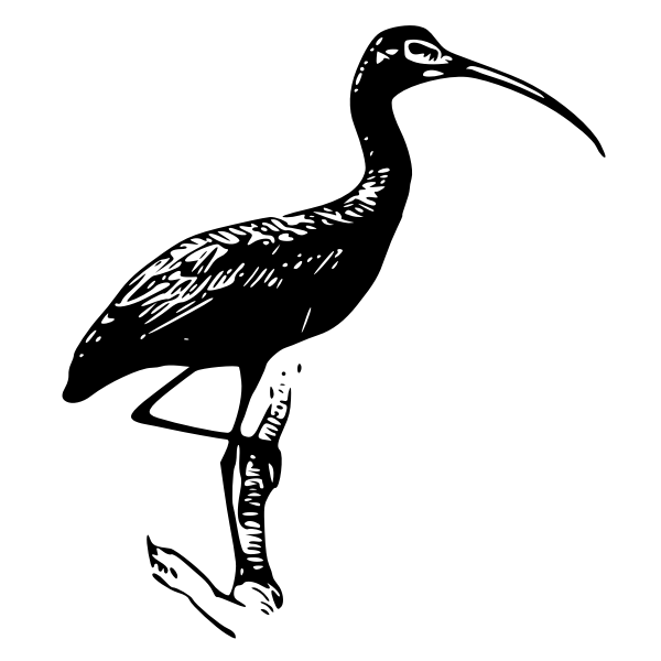 Glossy Ibis vector clip art