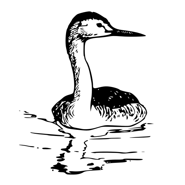 Western Grebe vector image