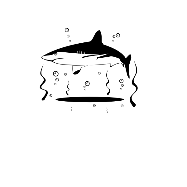 Shark vector drawing