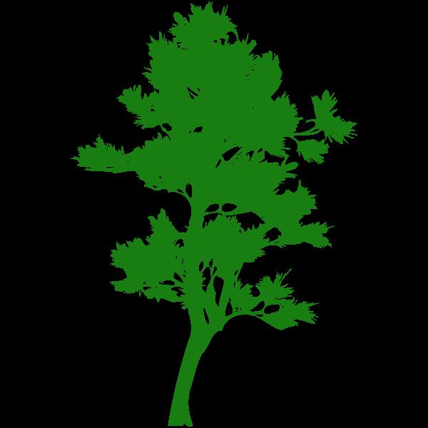 Tall tree silhouette