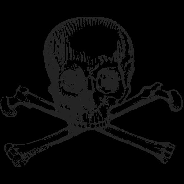 Skull with bones