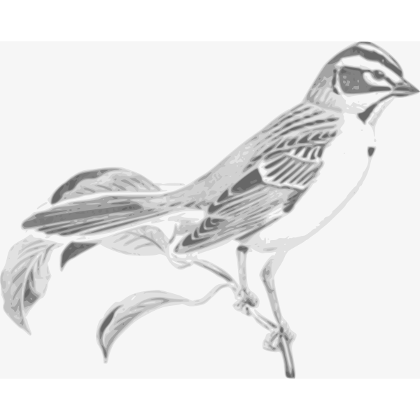 Sparrow bird monochrome clip art