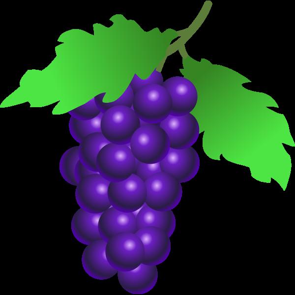 Vestor illustration of ripe grapes