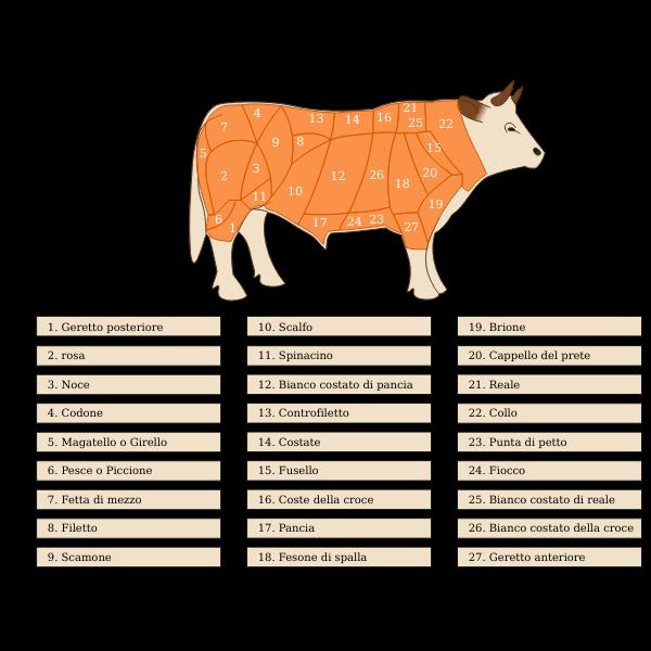 Vector image of beef cuts diagram