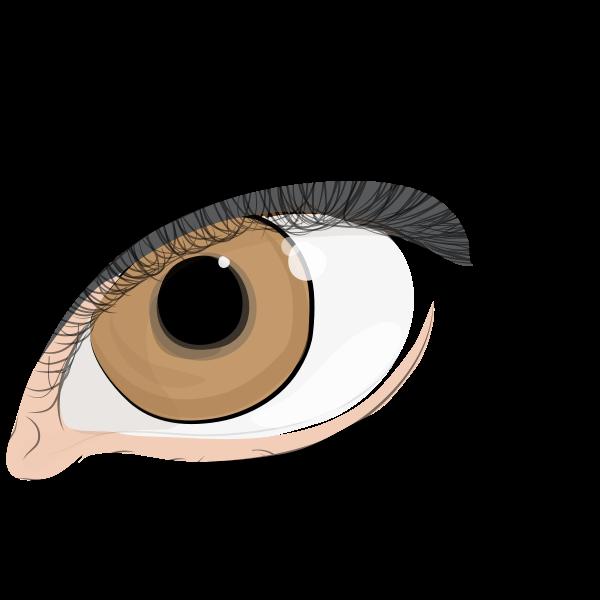 the eye of women 1580620 | Free SVG