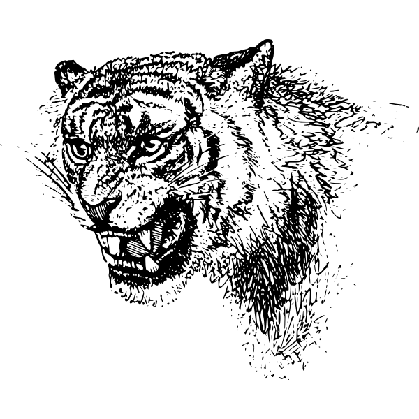 Tiger's head vector image