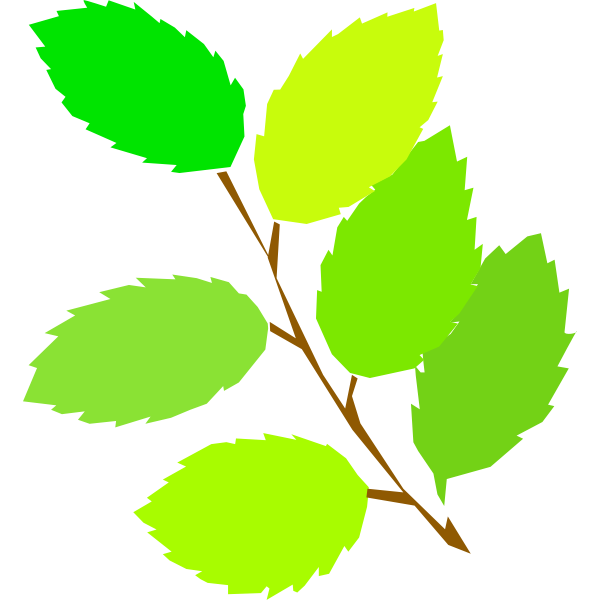 simple spring, new leaves