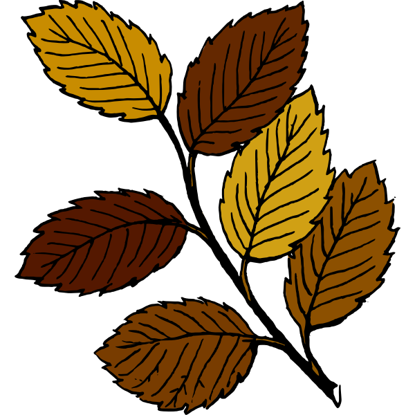 Autumn leaves on branch vector image