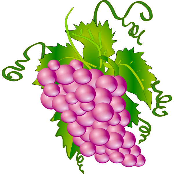Grape vector graphics