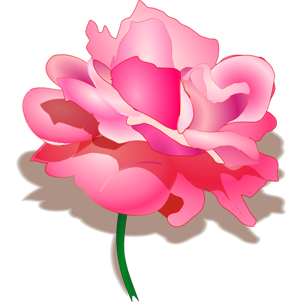 Vector drawing of rose