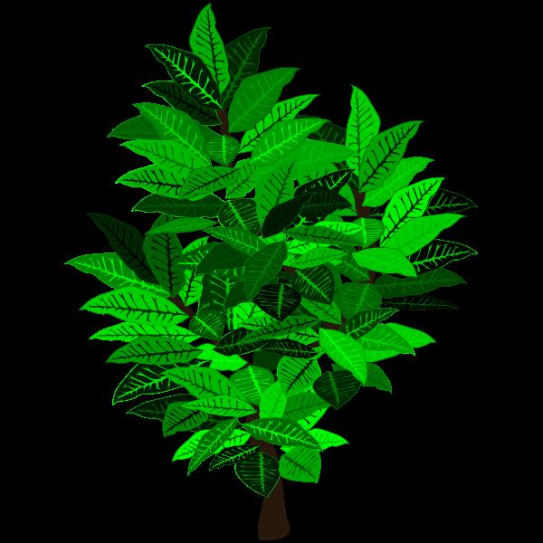 Green tree branch (#2)