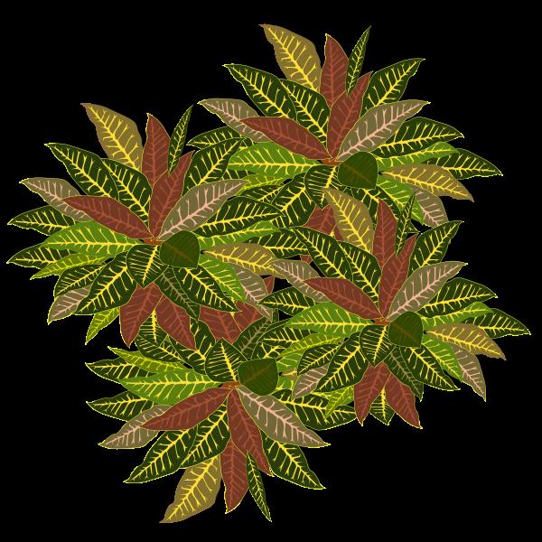 tree-11a