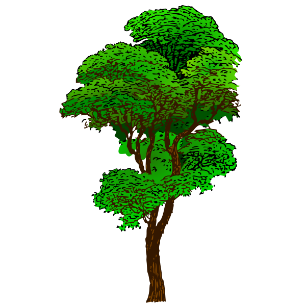 Colorized Tree