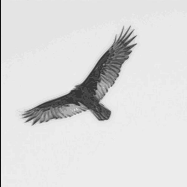 turkey vulture pencil sketch