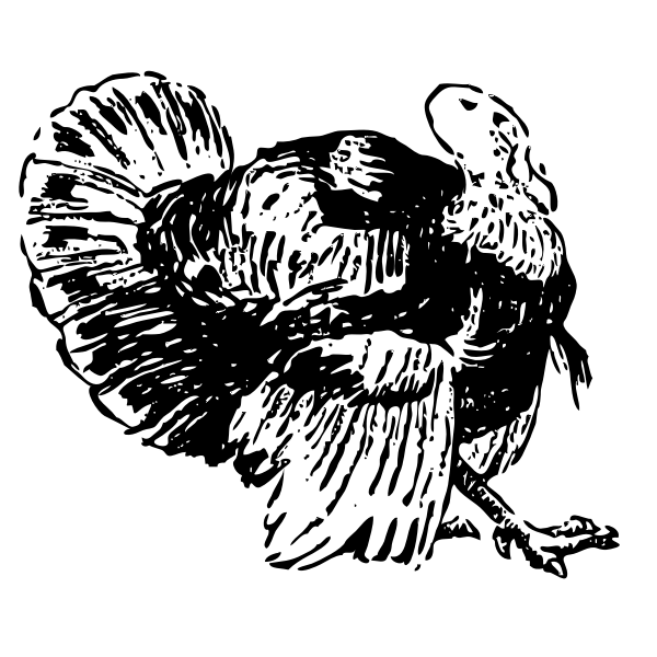 Line art vector drawing of turkey