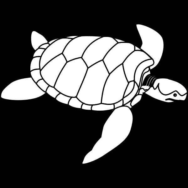 Green sea turtle line art