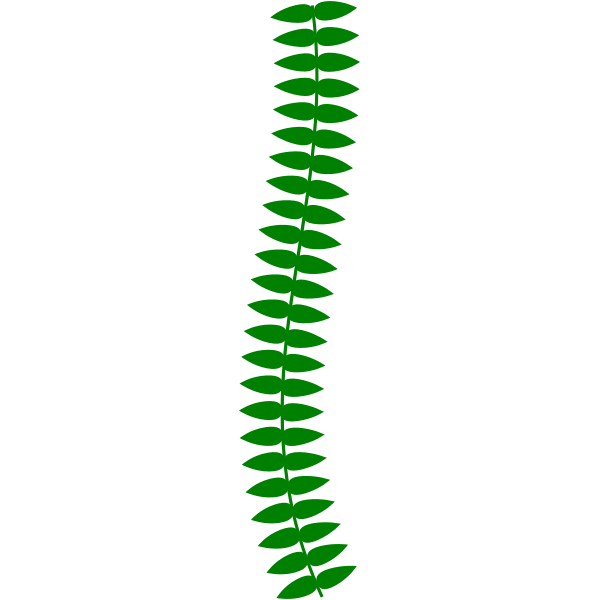 Long Thin Vine