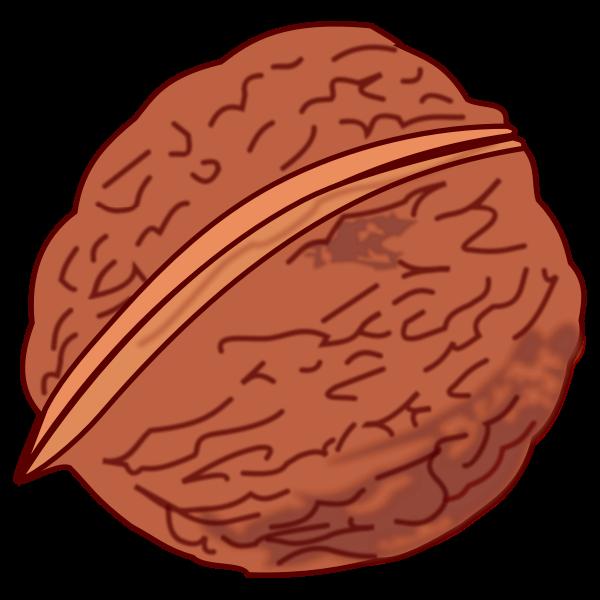 Walnut-1573222143