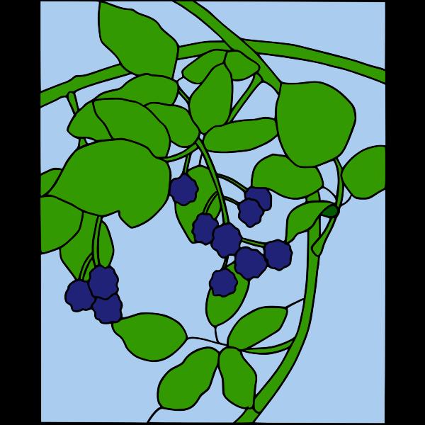 warszawianka Blackberry motif1
