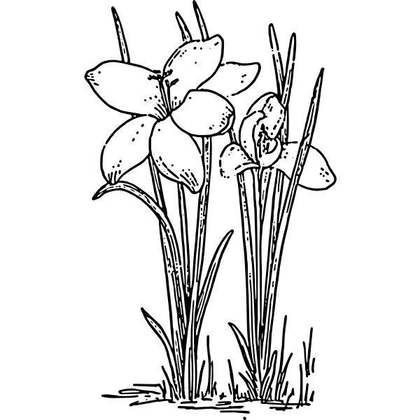 Crocus 3