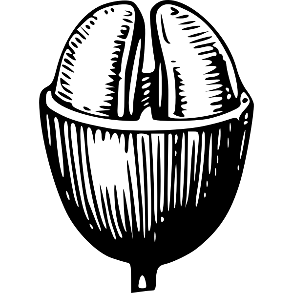 Coffee bean vector illustration
