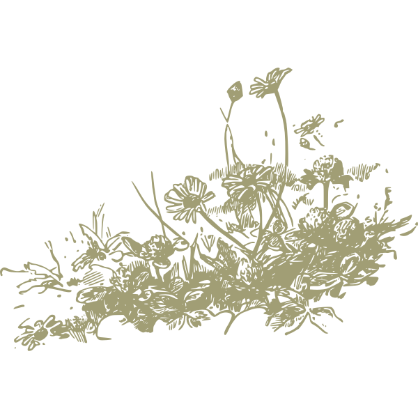 Wildflowers vector drawing